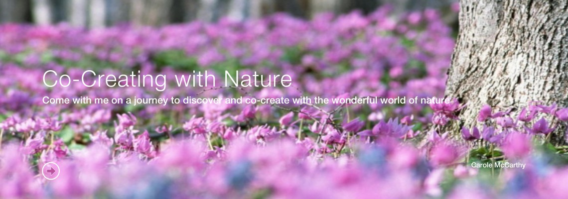 Co-Creating with Nature (Course)